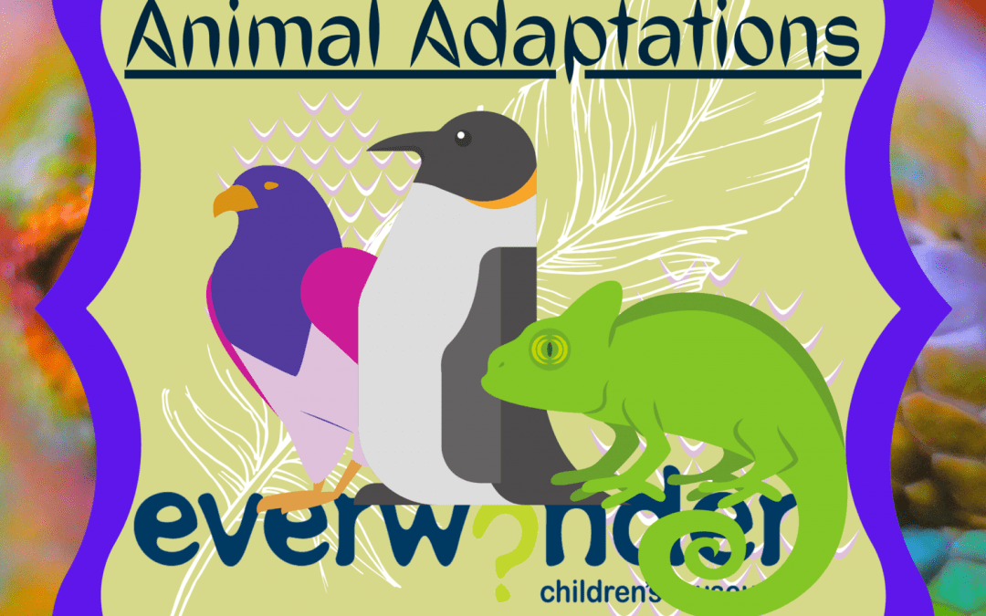 Animals Adapt!