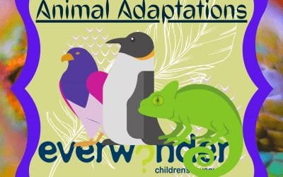 Animals Adapt!